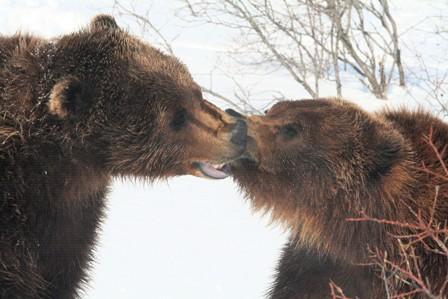 Bears%20Wild.jpg
