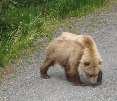 bear%202%20resized%20for%20blog.JPG