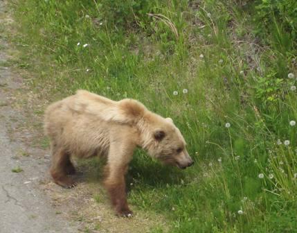 bear%203%20resized%20for%20blog.JPG